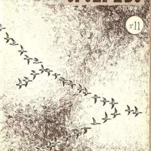 Migración de los gansos.