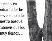 BesosArboreos2